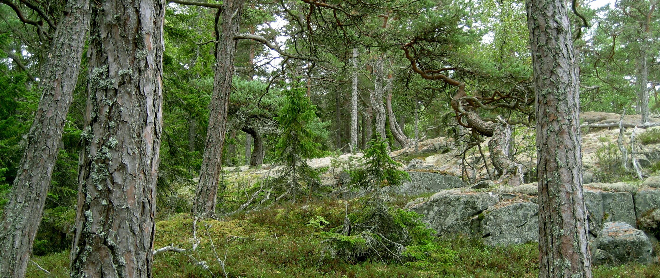 En hemsida om Göksnåres historia och utveckling genom tiden - Ta del av berättelser och bilder från 1000-talet framåt